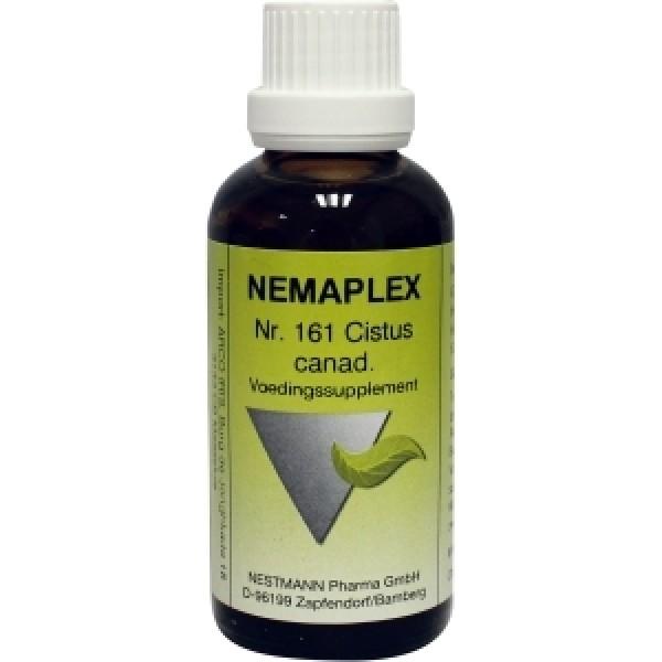 Cistus canadensis 161 Nemaplex