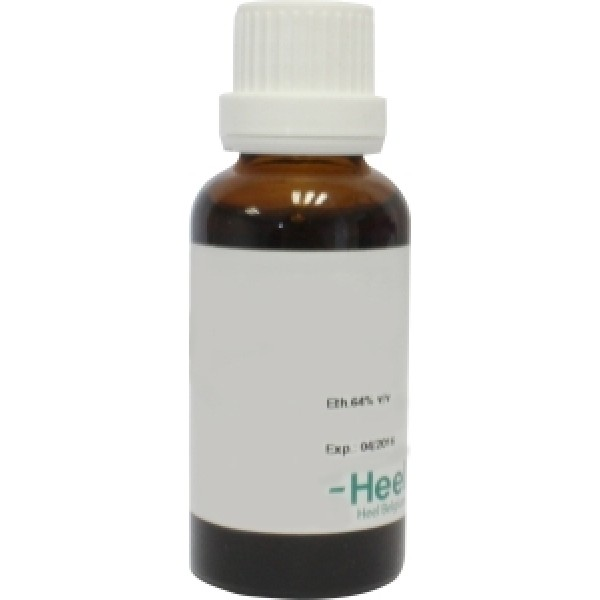 Humulus lupulus phyto